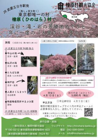 檜原( ひのはら) 村で渓谷・滝・岩の景勝地めぐりと年に一回の「人里さくらまつり」